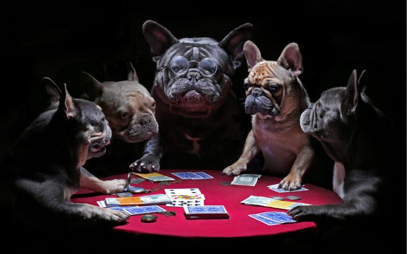 dog money, fiat money, gold, investments